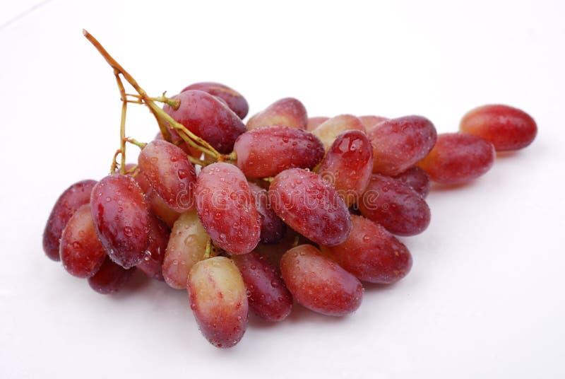 свежие виноградины изолировали красную белизну стоковые изображения
