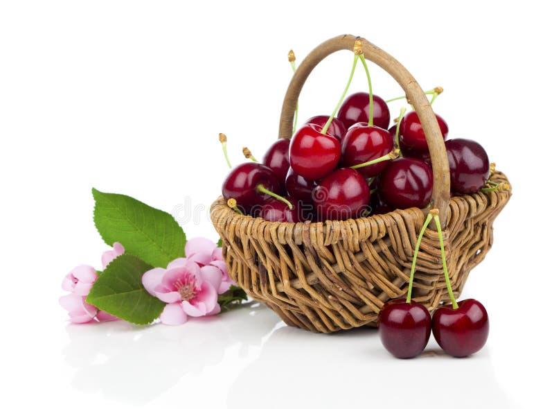 Свежие вишни в плетеной корзине стоковые изображения