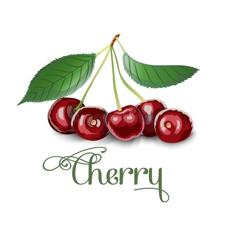 Свежие вишни ягоды вишневого дерева бесплатная иллюстрация