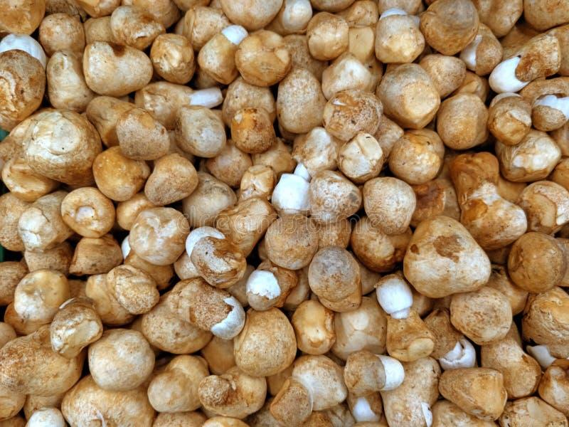 Свежие грибы каштана в рыночном мести стоковое изображение