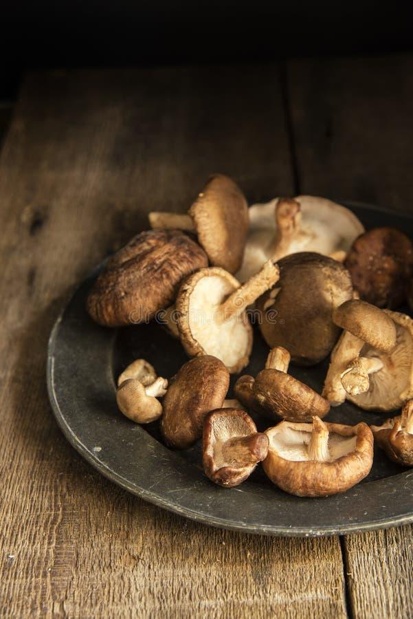 Свежие грибы шиитаке в унылой установке естественного света с vin стоковые изображения rf