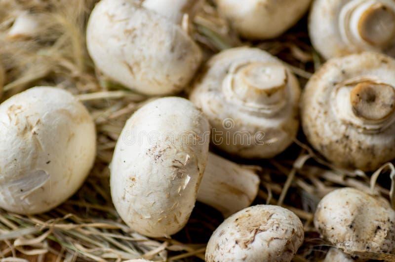 свежие грибы стоковое изображение rf