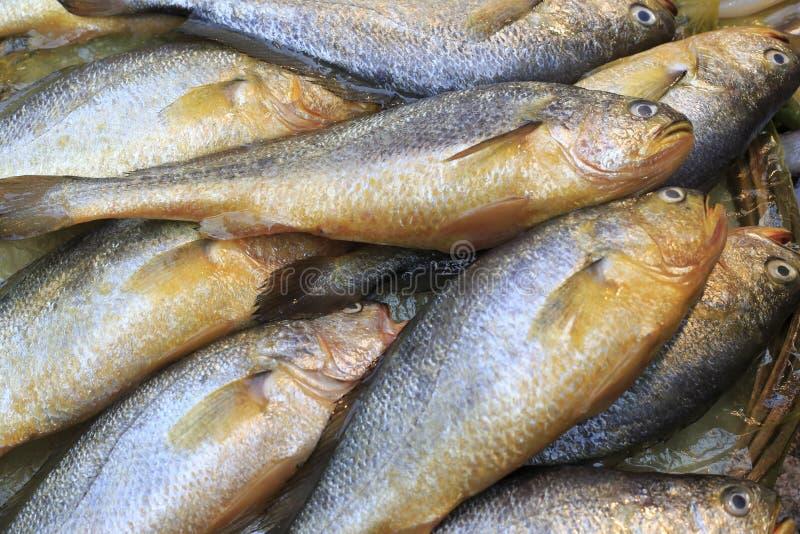Свежие желтые рыбы croaker стоковое фото