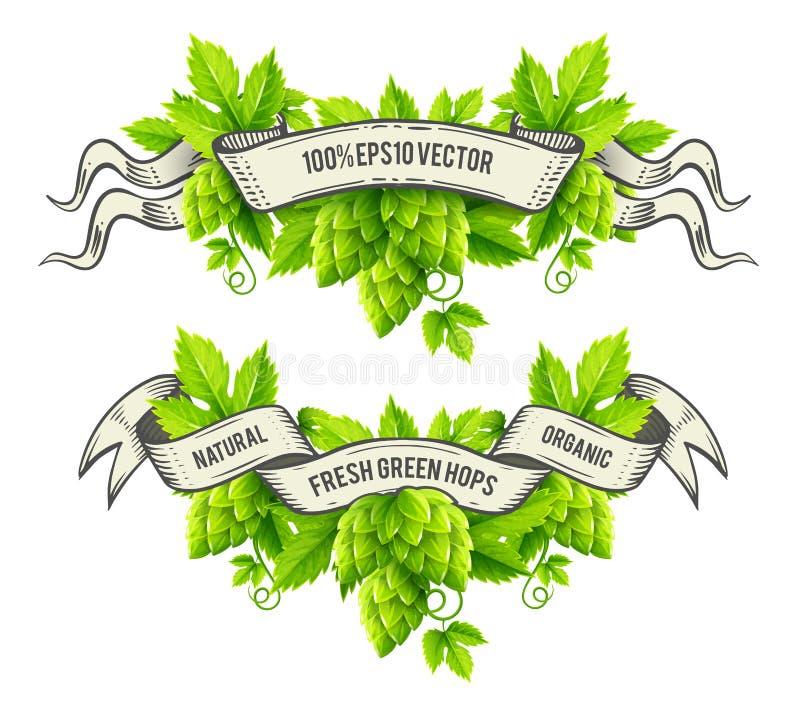 Свежие заводы хмеля с вектором лент листьев и плана зеленого цвета иллюстрация вектора