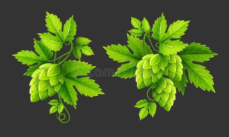Свежие заводы хмеля с зеленым цветом выходят вектор иллюстрация штока