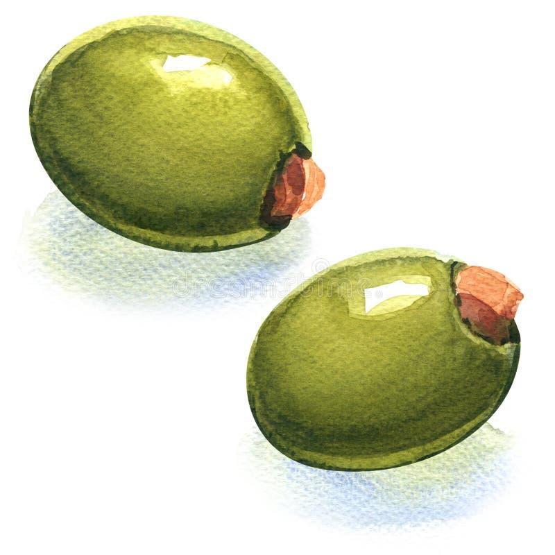 Свежие заполненные зеленые оливки иллюстрация штока