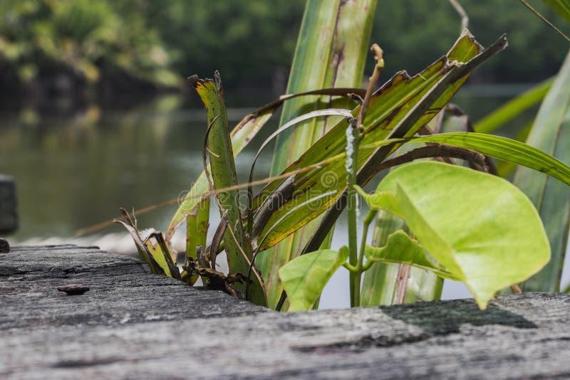 Свежие зеленые лист на разрушанной деревянной предпосылке Естественная компенсация стоковая фотография
