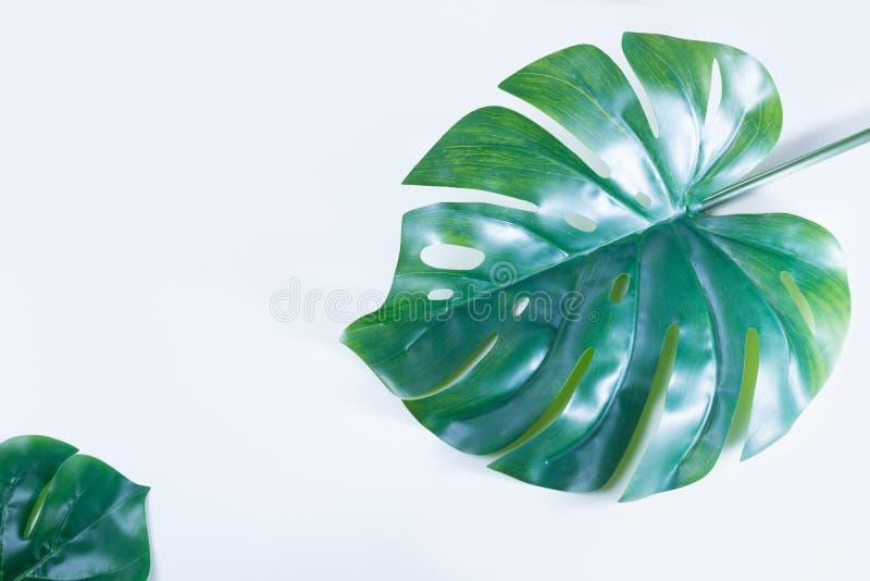Свежие зеленые лист стоковые изображения