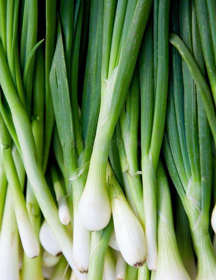 свежие зеленые луки стоковое изображение rf