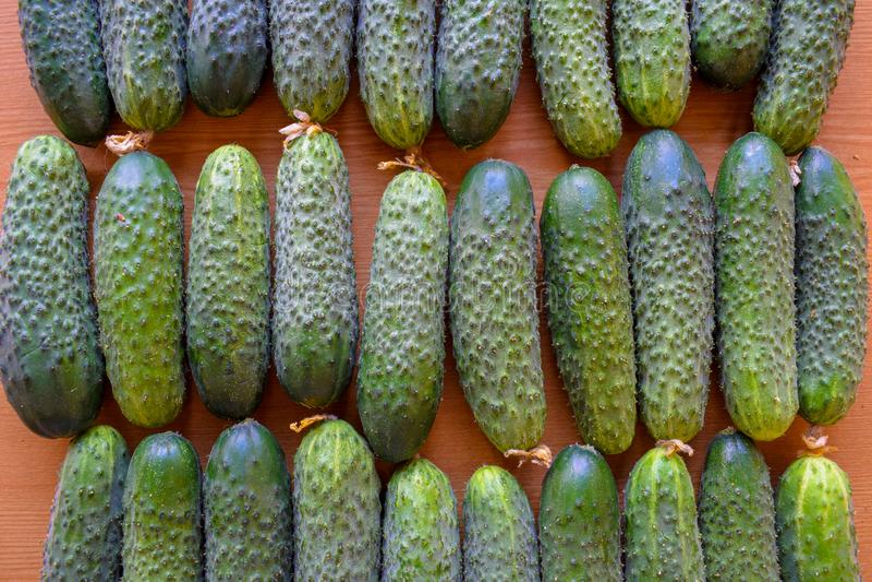 Свежие зеленые огурцы r Огурец содержит витамины b, a стоковая фотография rf