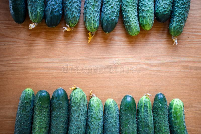 Свежие зеленые огурцы r Огурец содержит витамины b, a стоковое изображение