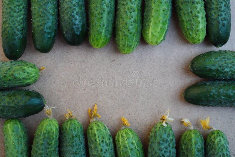 Свежие зеленые огурцы r Огурец содержит витамины b, a стоковые фото