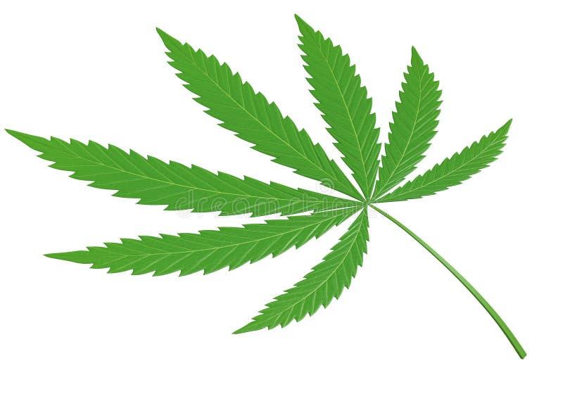 Свежие зеленые лист марихуаны, или конопля, вверх по концу в детали 3D иллюстрация штока