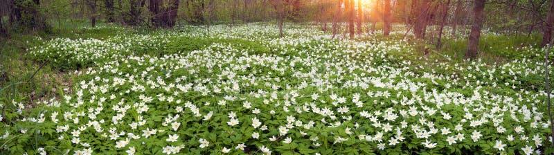 Свежие зеленые цвета и чувствительные душистые цветки стоковая фотография