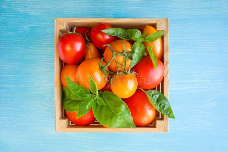 Свежие зрелые томаты и базилик в коробке на голубой предпосылке стоковые фото