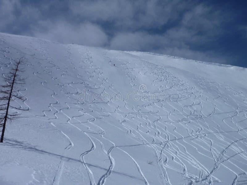 Свежие линии катания на лыжах freeride на наклоне стоковая фотография rf