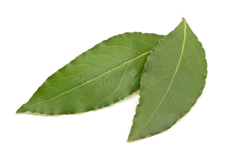 Свежие листья залива изолированные на белой предпосылке стоковое изображение