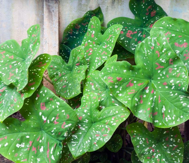 Download Свежие листья стоковое изображение. изображение насчитывающей детали - 40578325