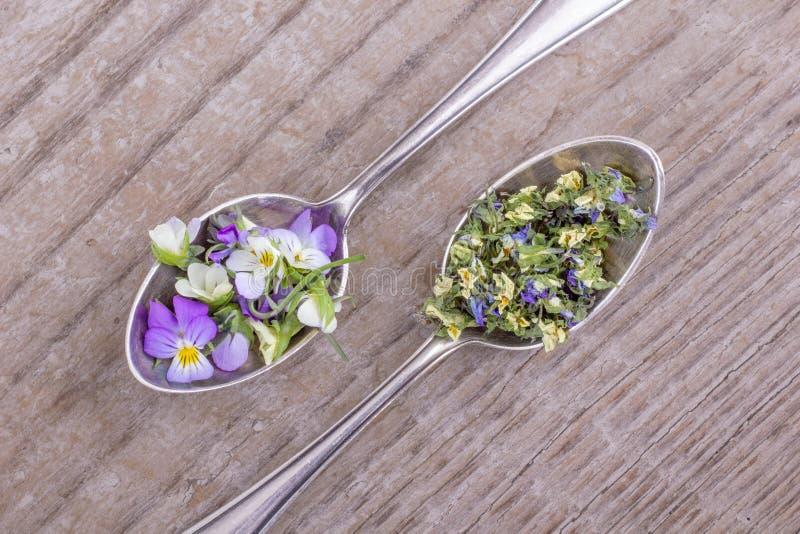 Свежие и высушенные цветки от фиолетового heartsease стоковая фотография