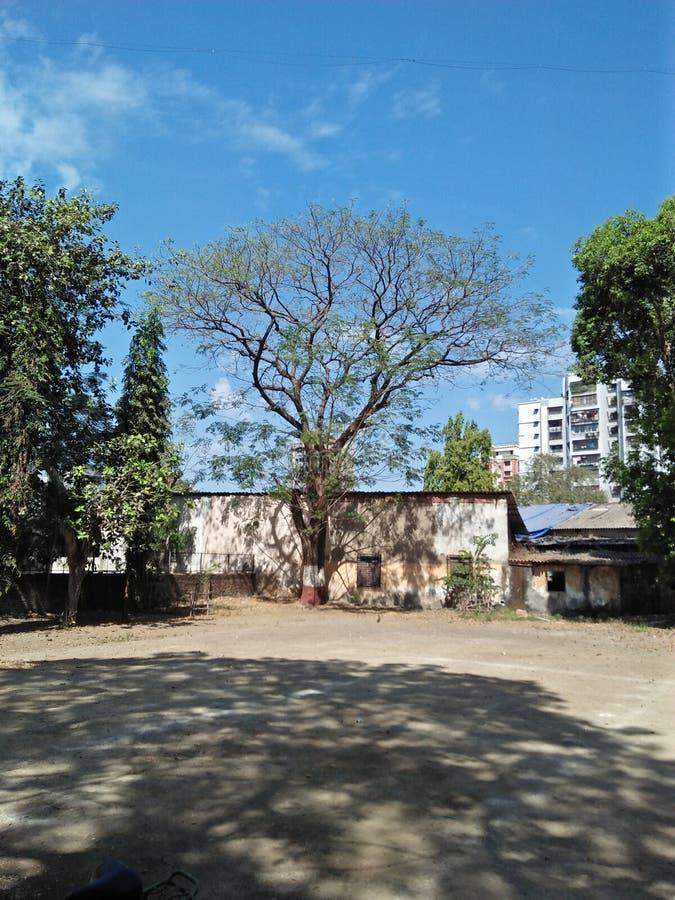 Свежие и красивые голубое небо и деревья стоковые фотографии rf