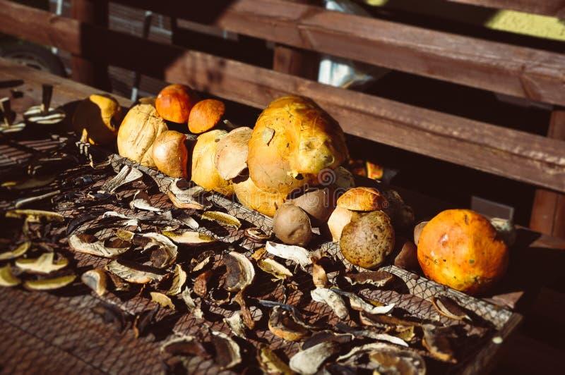 Свежие и прерванные грибы на засыхании солнца стоковое изображение