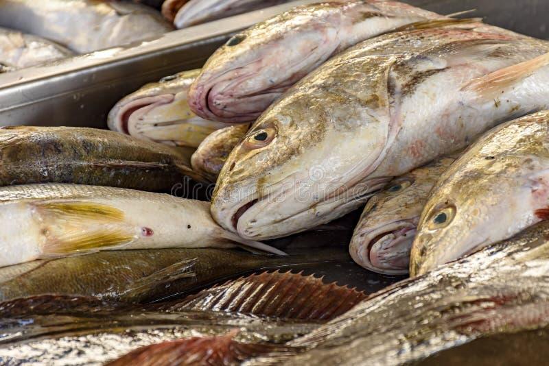 Свежие и свежо уловленные рыбы для продажи стоковое фото