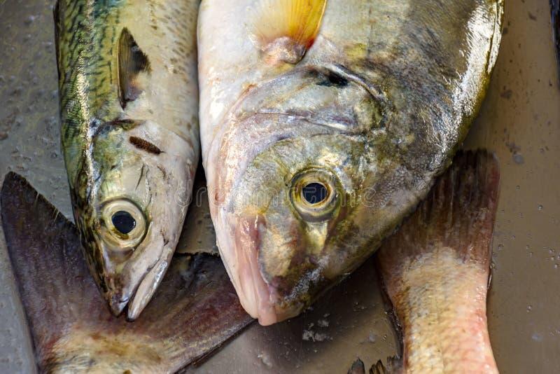 Свежие и свежо уловленные рыбы для продажи стоковые фото