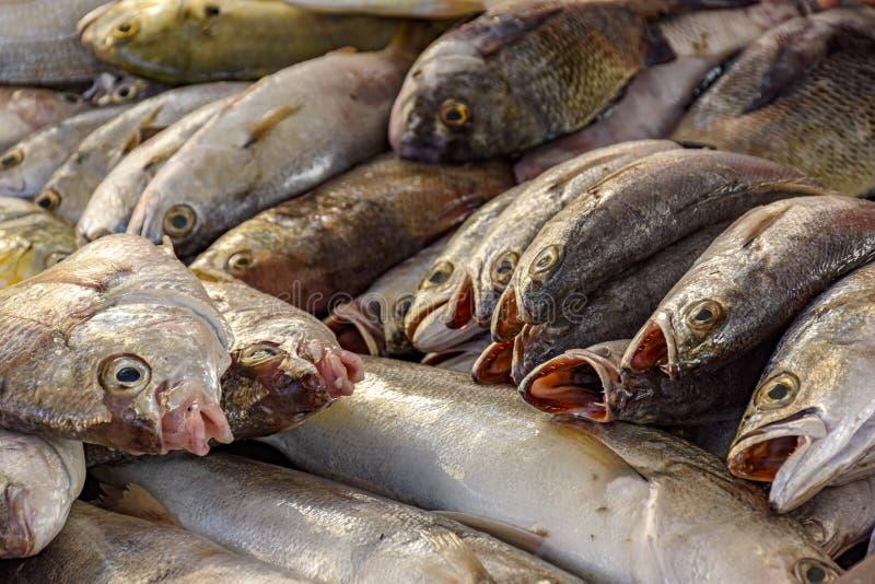 Свежие и свежо уловленные рыбы для продажи стоковое изображение rf