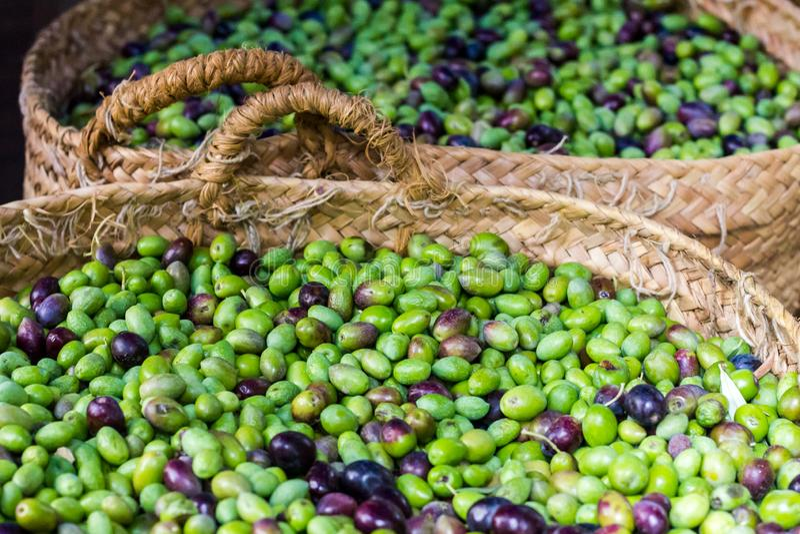 Свежие как раз сжатые оливки стоковые фото