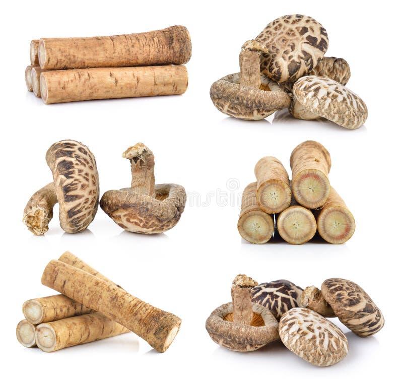 Свежие корни лопуха и гриб шиитаке стоковое изображение rf