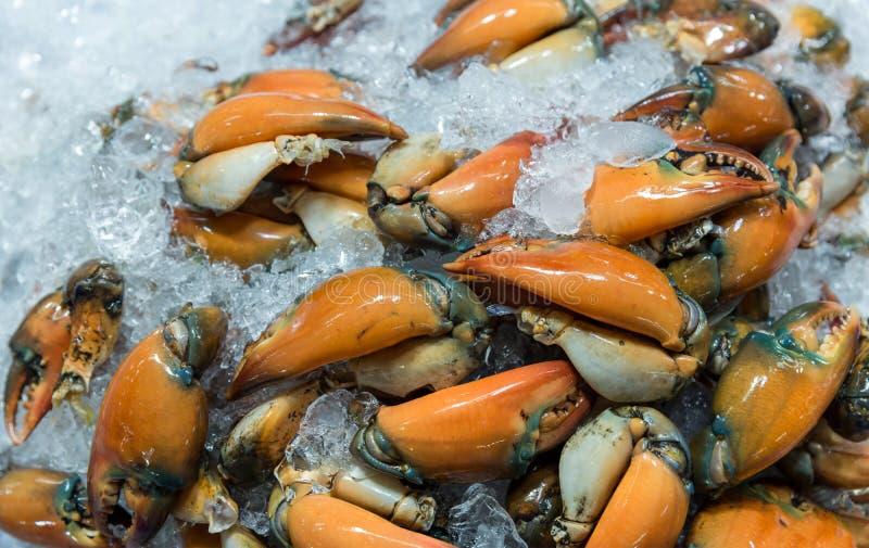 Свежие крабы в рынке морепродуктов филум членистоногого концепция armature и когтя Свежий краб моря которое прыгнуто и подготавли стоковое фото