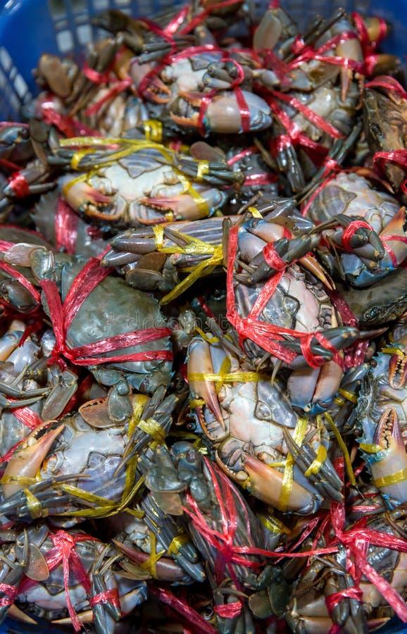 Свежие крабы в рынке морепродуктов филум членистоногого концепция armature и когтя Свежий краб моря которое прыгнуто и подготавли стоковые фотографии rf