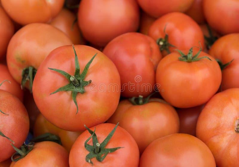 Свежие красные здоровые томаты стоковые фото