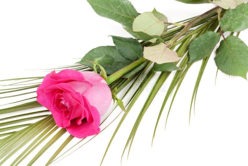 Свежие красные розы стоковое изображение rf
