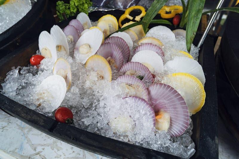 Свежие красочные раковины scallop стоковые фото