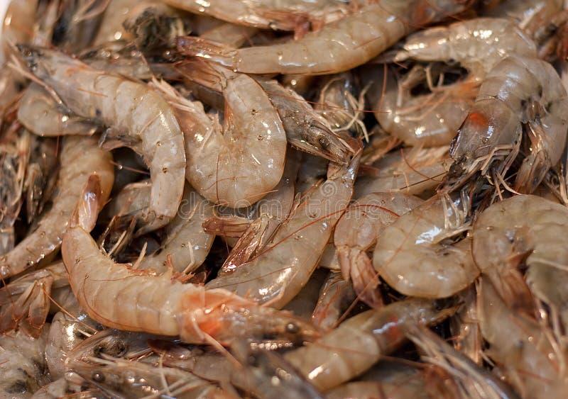 свежие креветки стоковое изображение