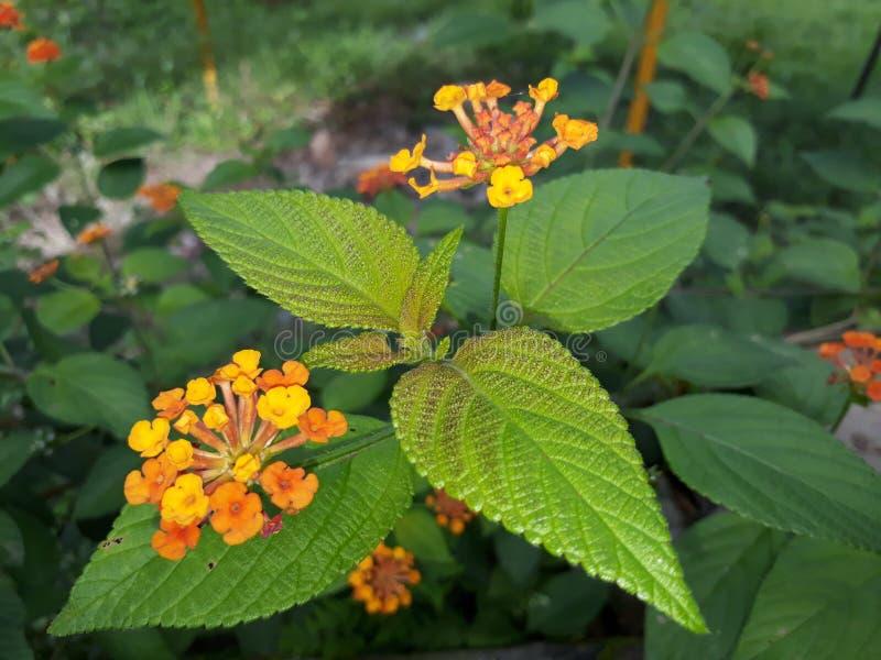 Свежие листья и цветки стоковая фотография