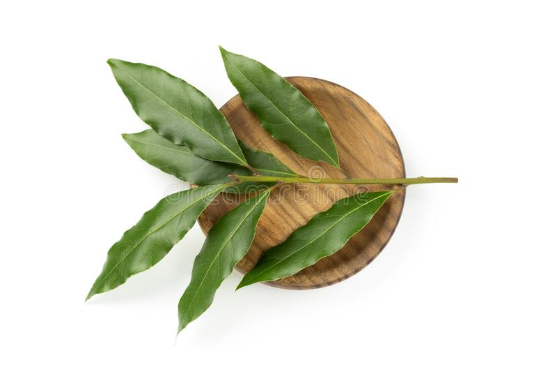 Свежие листья лавра залива стоковые изображения