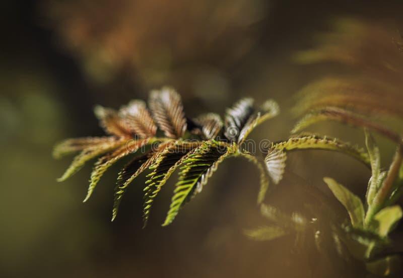 Свежие листья на ветви дерева Весна и концепция лета стоковые изображения rf