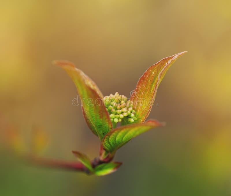 Свежие листья на ветви дерева Весна и концепция лета стоковые фотографии rf