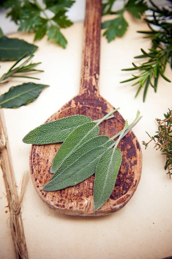 Свежие листья шалфея стоковое изображение
