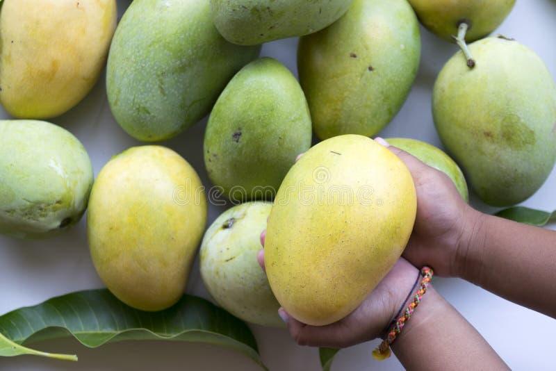 свежие мангоы стоковые изображения rf