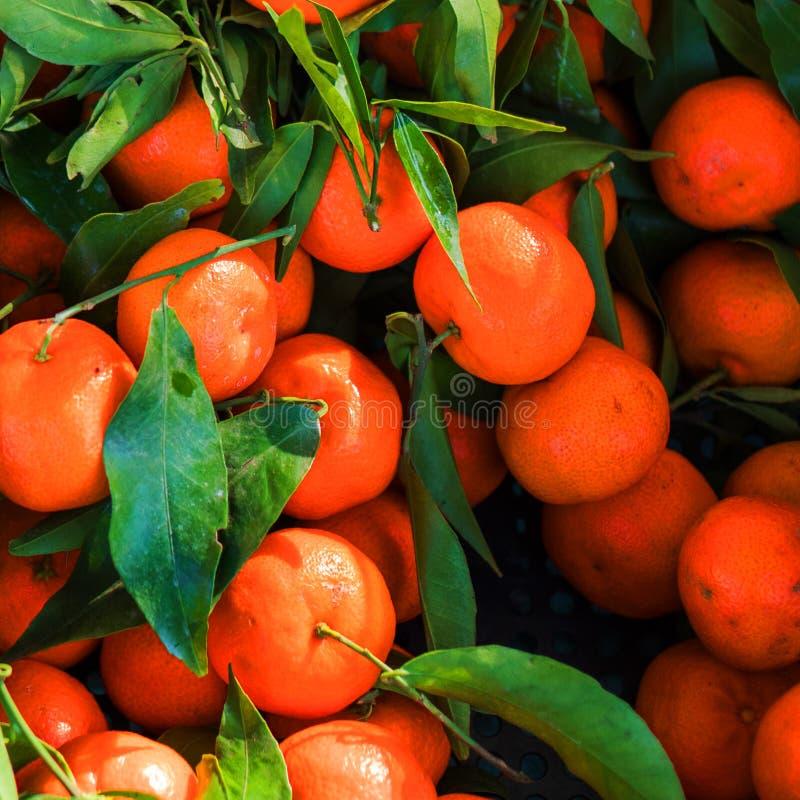 Свежие мандарины в деревянной коробке с зелеными листьями и хворостинами свеже стоковое изображение rf