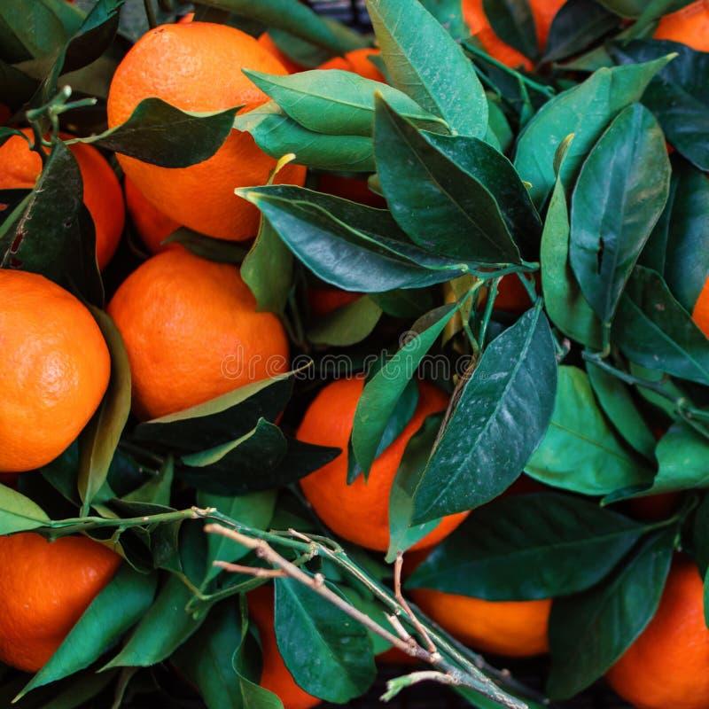 Свежие мандарины в деревянной коробке с зелеными листьями и хворостинами свеже стоковые изображения