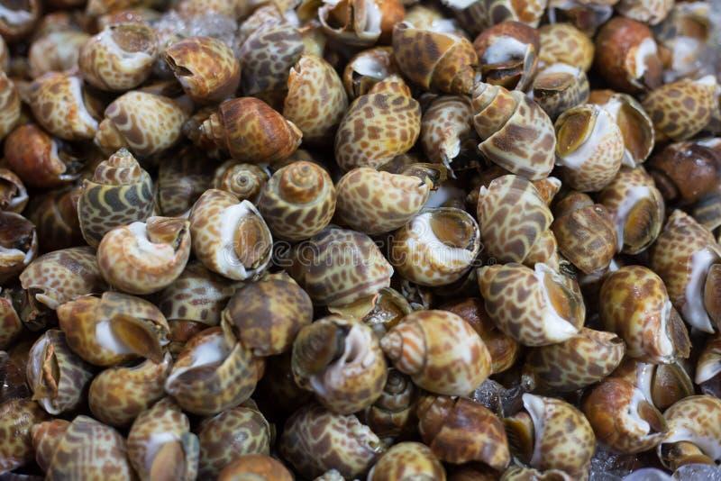 Свежие морепродукты моллюска Clams в рынке стоковые фото