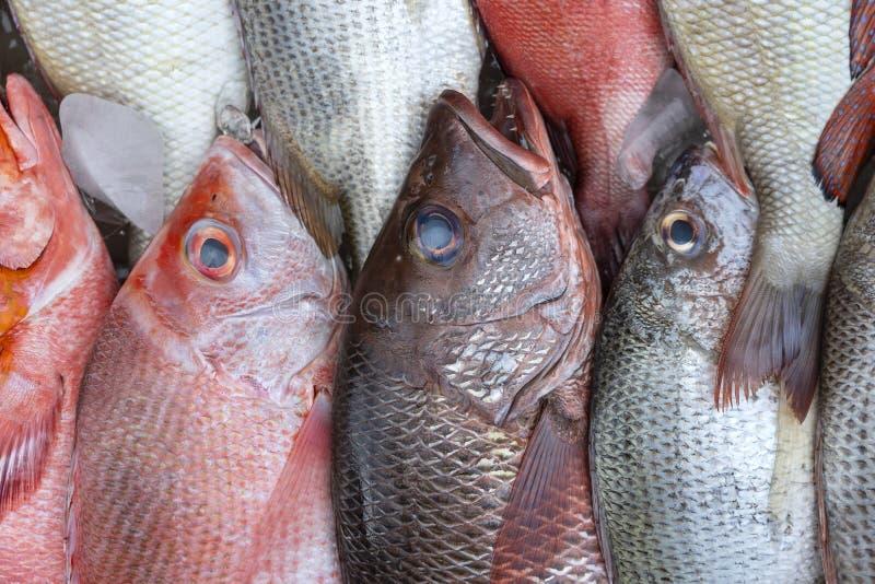 Свежие морские рыбы для продажи на рынке уличных продуктов питания в Кота Кинабалу, Борнео, Малайзия, закрывают морепродукты стоковые изображения
