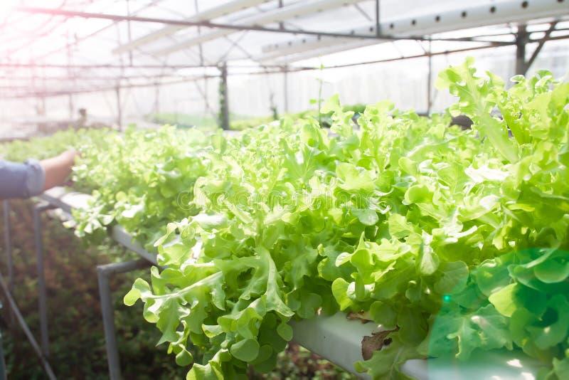 Свежие овощи гидропоники для меню салата принципиальная схема здоровая стоковое фото