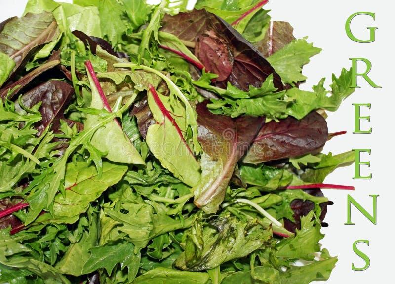 Свежие органические зеленые цвета смешивания весны стоковое фото rf