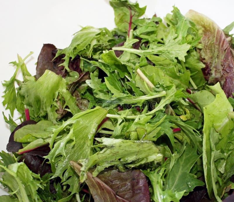 Свежие органические зеленые цвета смешивания весны стоковая фотография rf