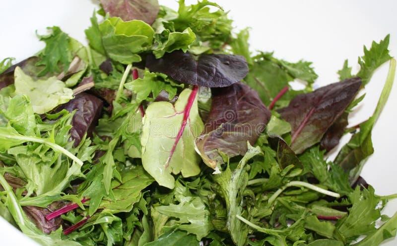 Свежие органические зеленые цвета смешивания весны стоковое изображение rf